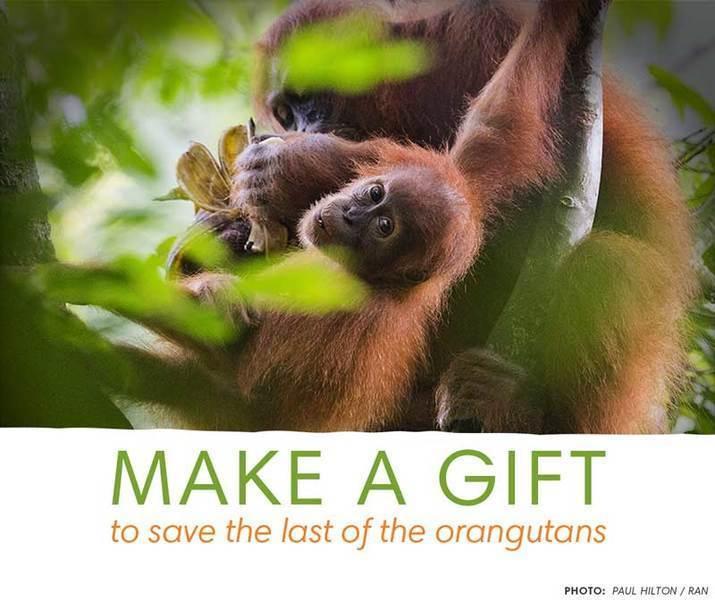 2015 09 grupobimbo onetime donate