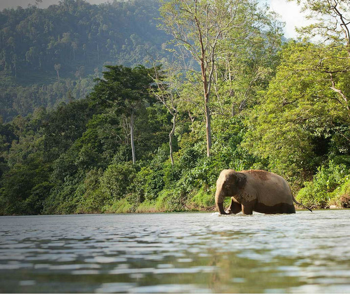 Donate elephant  2